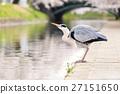 นก,แม่น้ำ,ดอกซากุระบาน 27151650