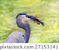 Great Blue Heron eating a fish 27153141