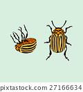 Colorado potato beetle (leptinotarsa decemlineata) 27166634