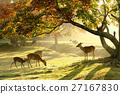 金奈良公園#1 27167830