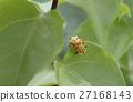 昆蟲 龜金花蟲 瓢蟲 27168143