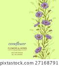 cornflower  vector background 27168791