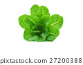 baby cos (lettuce) on white background 27200388