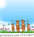 Four meerkats standing in the field 27213847