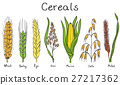 barley cereal cereals 27217362