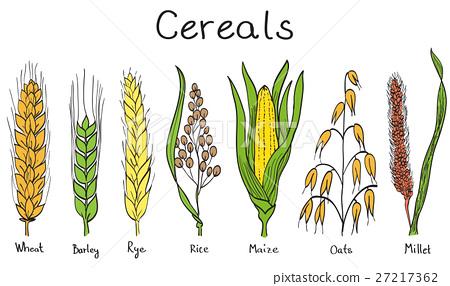 Cereals hand-drawn illustration 27217362