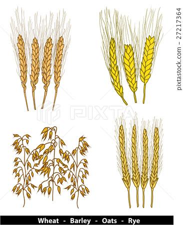 Cereals illustration 27217364