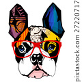 Portrait of french bulldog wearing sunglasses 27220717