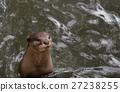 น่ารัก,น่าเอ็นดู,สัตว์ 27238255