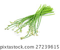 Chinese chives on white background 27239615