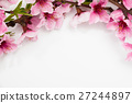 Pink plum blossom on a white  27244897