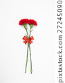 Red Carnation flower with red ribbon  27245090