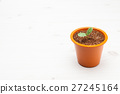 Little plant in a brown pot 27245164