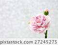 Pink carnation flower  27245275