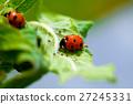 Ladybug on a green leaf 27245331