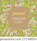 jasmine vector frame 27248834