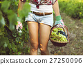 Smiling woman with basket of grapes in vineyard 27250096