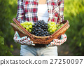 Smiling woman with basket of grapes in vineyard 27250097