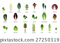 Set of salad bowl. Leafy vegetables green. Vector 27250319
