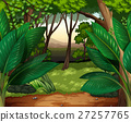 Forest scene with lots of trees 27257765