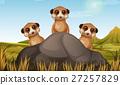 Three meerkats behind the stone 27257829