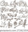 สัตว์,ปศุสัตว์,กิ้งก่าเปลี่ยนสี 27262359