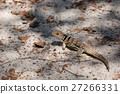 lizard, animal, foliage 27266331