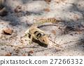 collared, madagascar, lizard 27266332