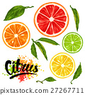 Set with citrus fruits slices. Mix of lemon lime 27267711