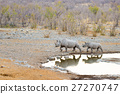 Rare Black Rhinos drinking from waterhole 27270747