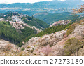 Cherry blossom on Yoshinoyama, Nara, Japan spring 27273180