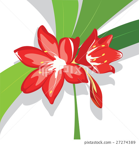 Flower red  Lily vector illustration 27274389