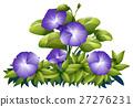 牽牛花 紫色 紫 27276231