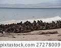 กลุ่มแมวน้ำป่า (Cape Cross, Namibia) 27278009