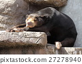 bear, bears, animal 27278940