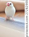 鸟儿 鸟 禾雀 27282900