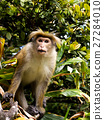 Asian monkey on the tree 27284010