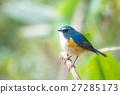 明治神宫Ruribiraki的野生鸟 27285173