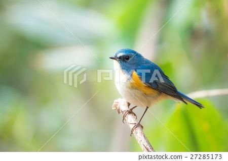 明治神宮Ruribiraki的野生鳥 27285173