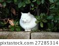 白猫 流浪猫 猫 27285314