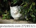 白猫 27285321