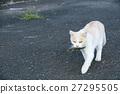 animal, animals, cat 27295505