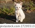 动物 猫 猫咪 27295513