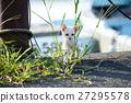 动物 猫 猫咪 27295578