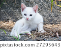 动物 猫 猫咪 27295643