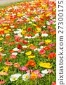 poppy, bloom, blossom 27300175