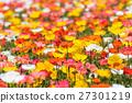 poppy, bloom, blossom 27301219