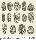 Pine cones of cedar spruce fir christmas tree 27304599