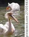 นกกระทุง,สัตว์,ภาพวาดมือ 27305483