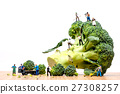 Farmers harvesting broccoli and loading truck 27308257